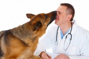 Work with your vet to fight canine dental disease.