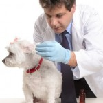 Pet insurance gives owners peace of mind