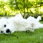 Many dogs eat grass in an effort to soothe upset stomachs. Other dogs eat grass when they are hungry,