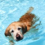 Teach your dog to get in the pool in six easy steps.
