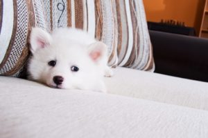choose the right pet for apartment living