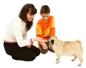 Woman and boy play with pug. Set rules and supervise to ensure kids and dogs interact safely.