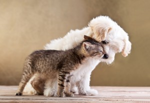 dogs and cats can live in peace