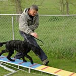 The 5 stages of successful dog training