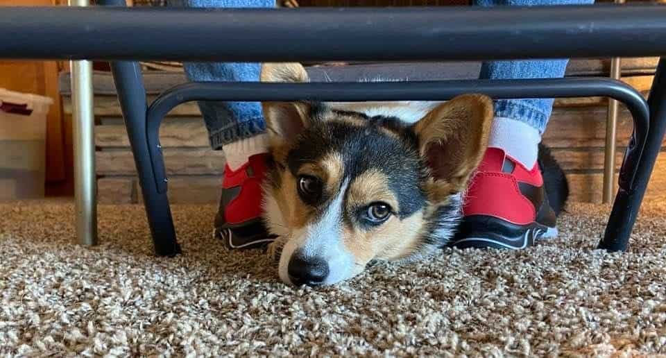 Take dog photos on the floor.