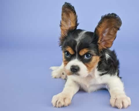 The most common warning signs to watch for in your puppy's behaviors include snarling, growling, mounting, snapping, nipping, lip curling, lunging, dominance, challenging stance, dead-eye stare, aggressive barking, possessiveness, and of course, biting!