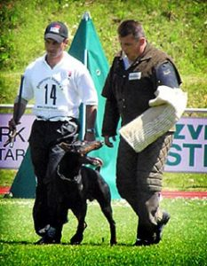 John Soares Dog Trainer. Dog training tips from the CIA