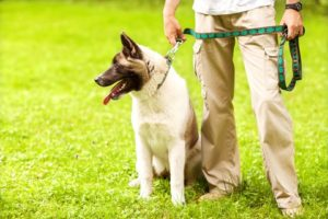 To make the most of daily dog walks, keep your dog on a loose leash and choose a route and pace that is comfortable for both you and your dog.
