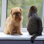 Trying to decide whether to adopt a dog or cat? Use our list to help you make a choice.