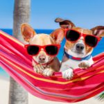 Keep your dog cool this summer with DogsBestLife.com's 15 tips.