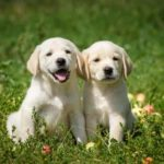 Dogs suffer spring-time allergies