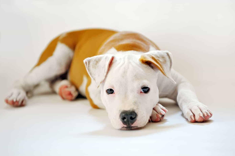 dog photo shoot 2