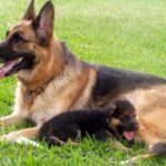 Having a well-trained dog will allow you to take them just about anywhere without worry.