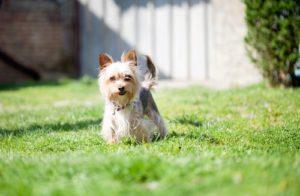 make yard puppy paradise