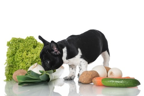 Boston Terrier explores foods that are safe for dogs to eat. Can dogs eat grapes? Simple answer. No.