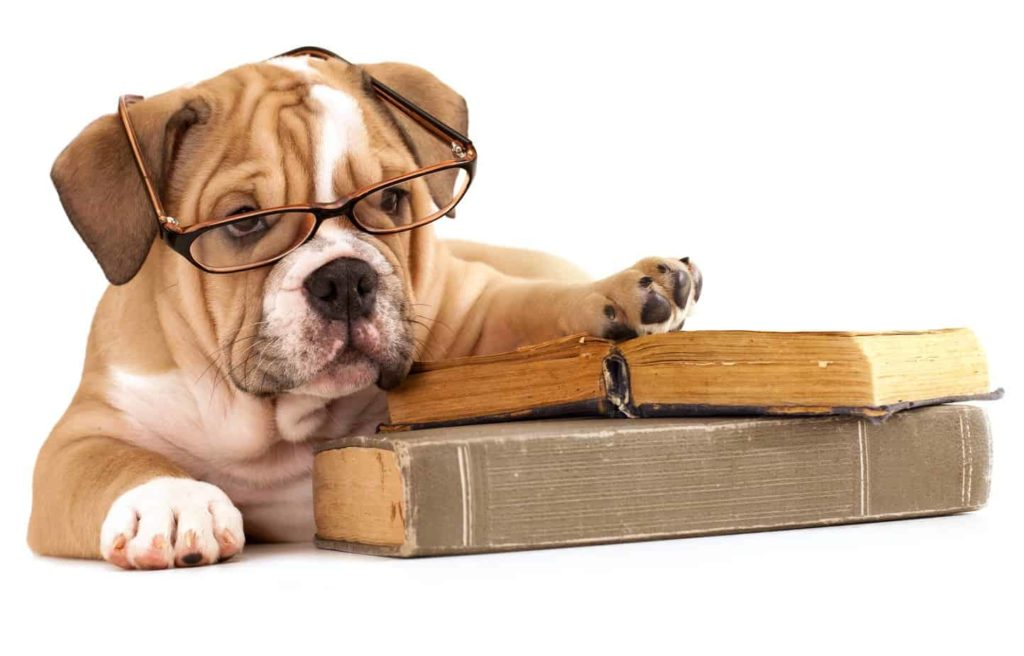 canine brain smartest dog breeds
