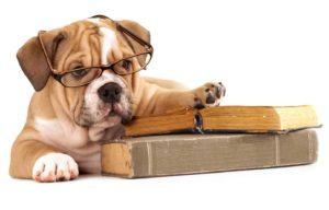 canine brain smartest dog breeds