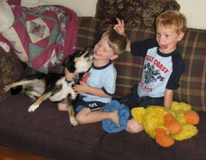 Help children and dogs bond: Sydney an Australian shepherd/corgi mix plays on the couch with two young boys