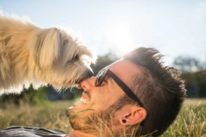 reasons dogs lick