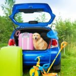 Take your dog on your next driving vacation