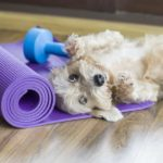 Dog rests on yoga mat for doga class.