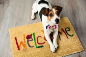 Keep toxic household products away from your dog.