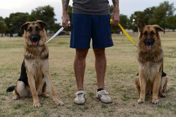 trip less trainer dogs