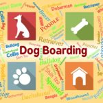 How much does dog boarding cost?
