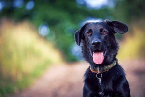 happy dog no pests