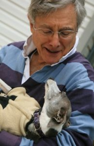Older man holds Italian greyhound. Dogs and senior citizens are a good combination.