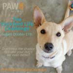 Take the 5-day challenge to enrich your dog's life