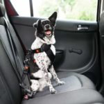 Safely take your dog on daily car rides