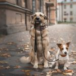 A terrific way to help your new dog bond with his older companion is to walk them together.