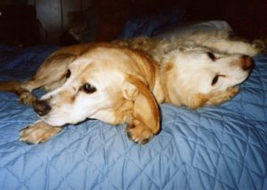 Two old dogs snuggle together. Learn the four chapters of your dog's life.