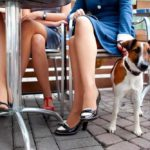4 tips to take care of your dog when you're short on time