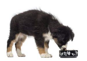 dog name