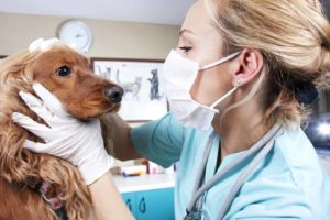 find a veterinarian for your dog