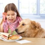 Stop your dog from snatching food