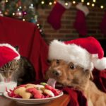 7 tips to ensure good canine holiday behavior
