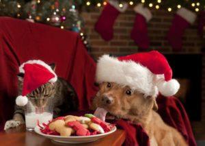 good canine holiday behavior