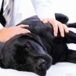What you need to know about canine diabetes
