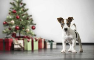 good holiday canine behavior