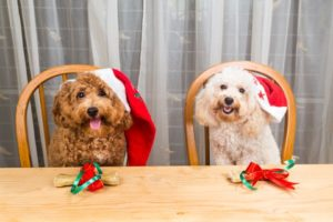 two dogs dressed in Santa hats holiday food dangers