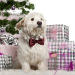 True dog lovers don't buy puppies as Christmas gifts
