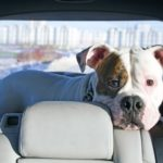 3 tips to make your next dog car ride successful