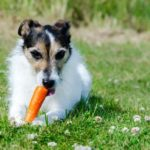 carrots are one of the healthy human foods dogs can eat