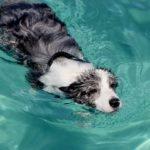 Teach your dog to swim by first getting him comfortable in water.