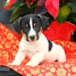 Common holiday plants like poinsettias, holly and mistletoe can be dangerous for dogs. Instead, use dog-friendly plants to decorate.