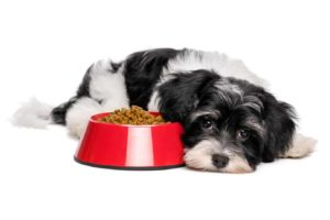 choose dog food