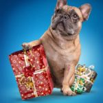 Choose an eco-friendly gift for your dog and pet-loving friends